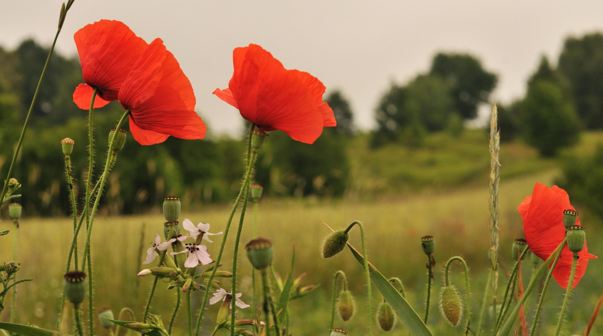 We will never forget: Statement by the Green party leader on Remembrance Day
